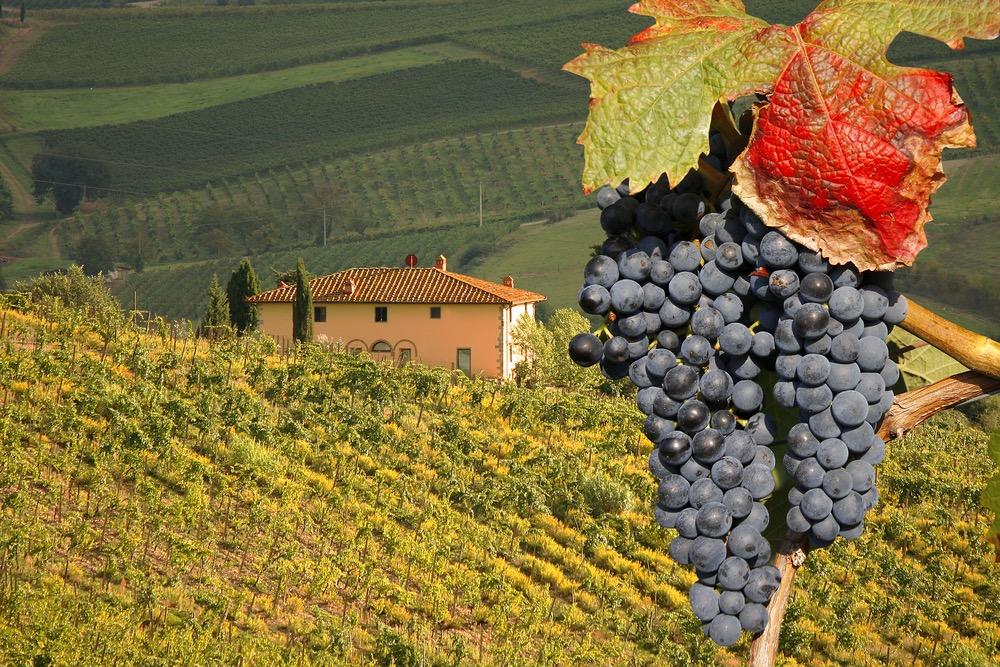 Купить виноградники в кьянти